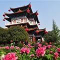 The 30th Luoyang Peony Culture Festival