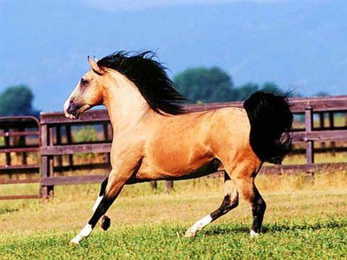 Yili Heavenly Horse