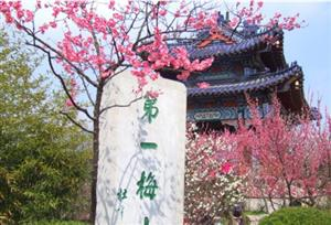 Plum Blossom Mountain