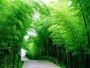 Chinese Bamboo Culture