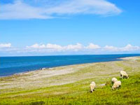 6-Day Qinghai Lake and Lhasa Tour from Beijing
