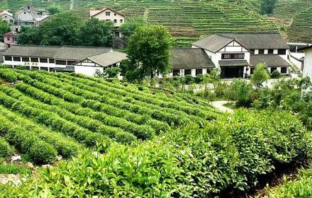 Meijjiawu Tea Plantation (Dragon Well Village)