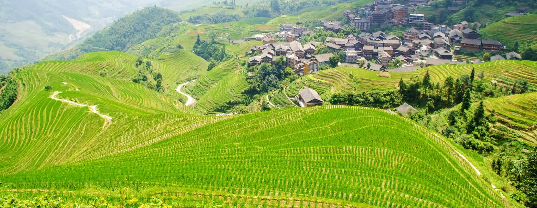 Longji Terraced Field Tours