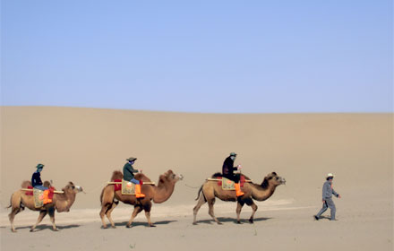 Camels on the desert part of the Silk Road