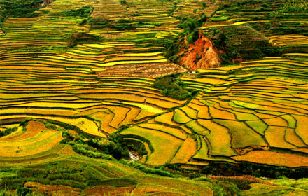 Jiangling Terraced Fields in Jiangxi Province