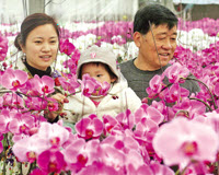 New Year Flower Market