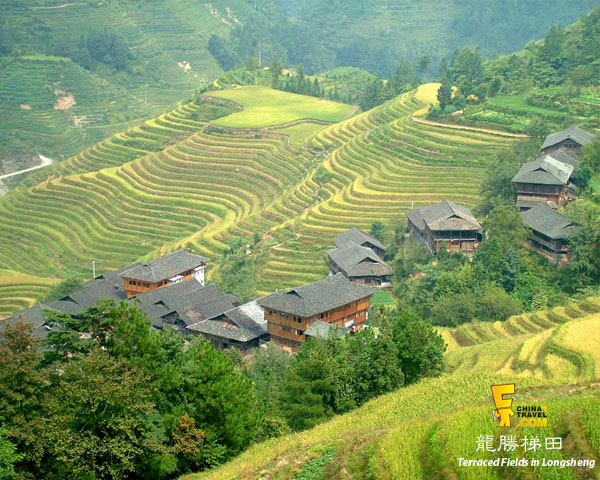 Terraced Fields in Longsheng