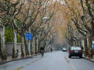 Leisure Walk in the French Concession
