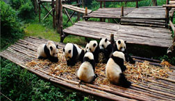 Chengdu Day Trips