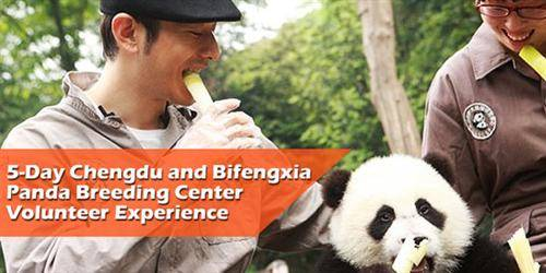 Chengdu and Bifengxia Panda Breeding Center Volunteer Tour