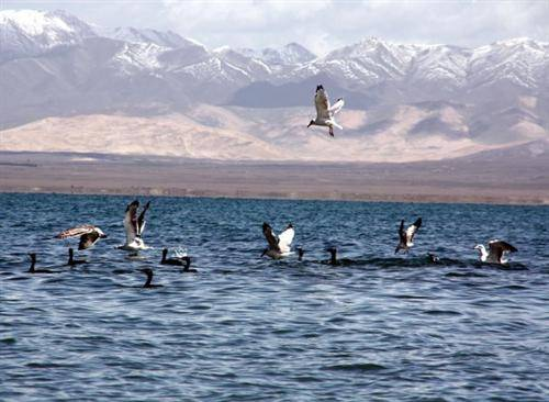 Qinghai Lake and Bird Island