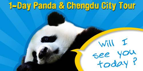 1-Day Panda Tour & Chengdu Highlights